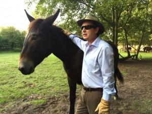 strong Poitou Donkey Mulassier Mule