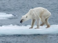 G 20 please change! – polar bears starve, but cows in the desert